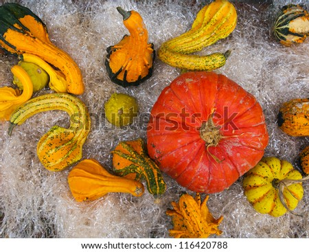 Assorted winter squashes aka pumpkins - stock photo