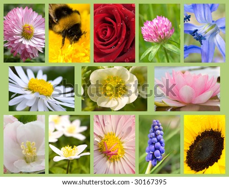 assortment flowers - stock photo