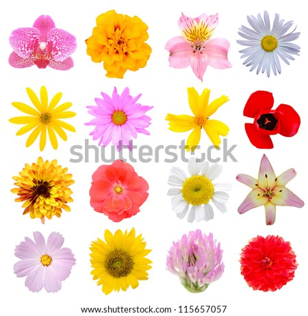 Assortment flowers in America