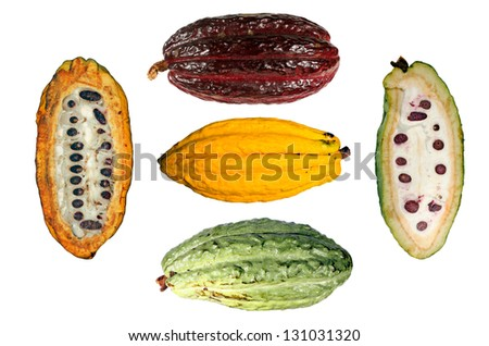 Assortment of cocoa pods (Theobroma cacao)  from Ecuador - stock photo