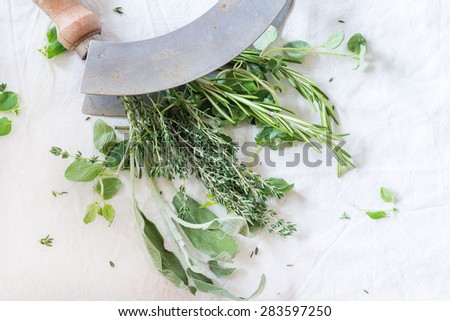 Assortment of fresh herbs thyme, rosemary, sage and oregano with vintage herb's cutter on white textile as background. Natural day light. Top view. - stock photo