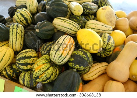 assortment of melons and squash at market                                - stock photo