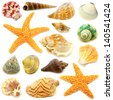 Assortment of sea shells individually isolated on white - stock photo