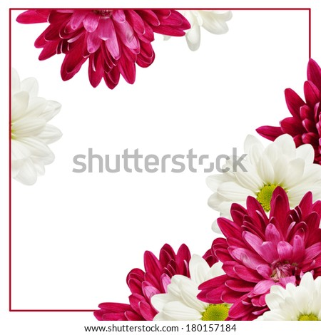 Aster flowers and frame on white background - stock photo