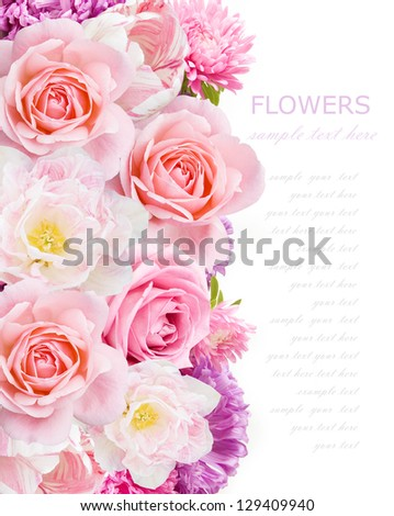 Aster, roses and tulips background isolated on white with sample text