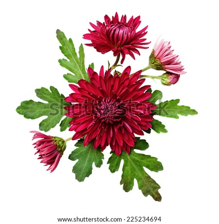 Asters flowers composition on a white background - stock photo
