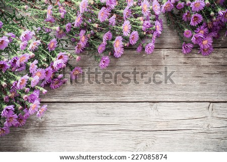 asters on an old wooden table - stock photo