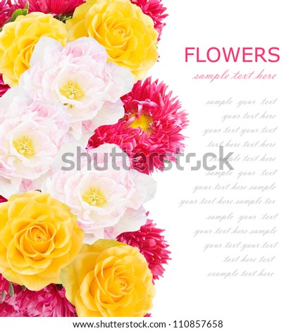 Asters, roses and tulips flowers background isolated on white with sample text