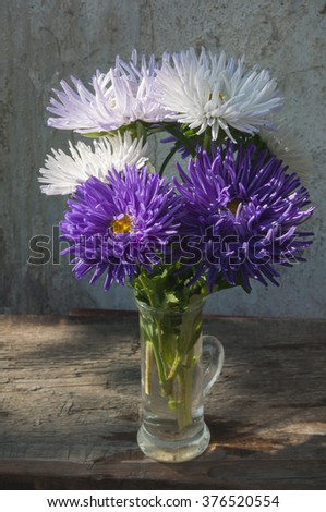 asters still life - stock photo