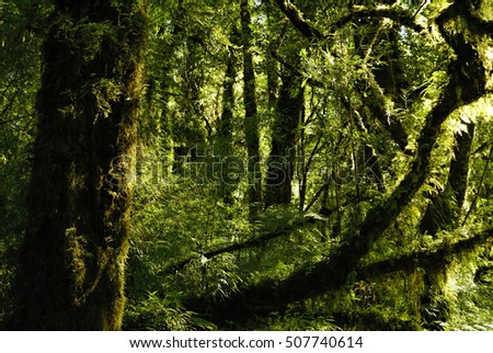 Astonishing view of tall trees covered in moss illuminated by rays of sun
