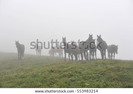 at dawn horses graze in the meadow