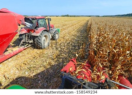 At harvest corn. - stock photo