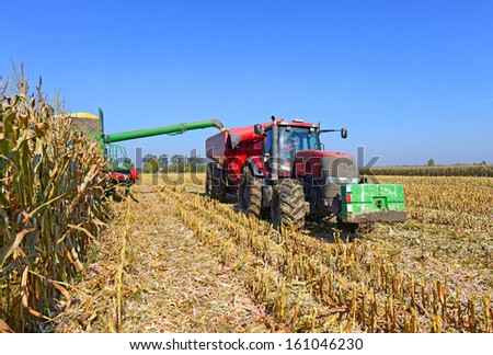 At harvest corn - stock photo