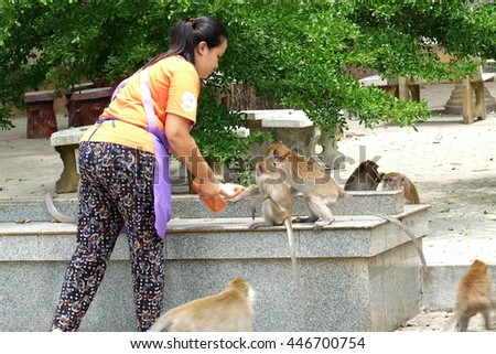 At Krabi thai temple,Thailand-July 2016:Unidentified woman was feeding many monkeys at Krabi thai temple,Thailand-July 2016:Krabi thai temple,Thailand had more monkeys,they liked bananas and corns.