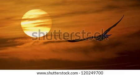 At sunset a seagull flies into the sun - stock photo