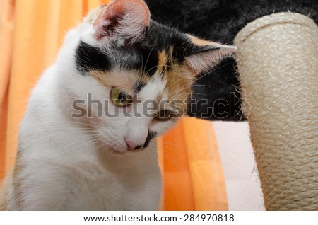 at the cat condo... - stock photo