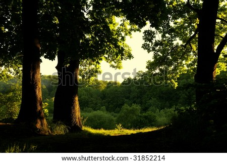 At the edge of oak forest - stock photo