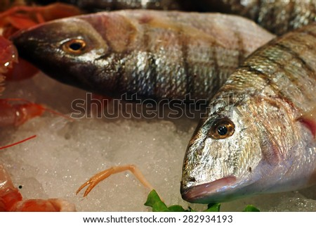 At the fish market in Italy - Sand steenbras (Lithognathus mormyrus) on an ice bed