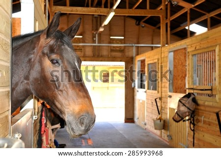 At the stables (selective focus on horse) - stock photo