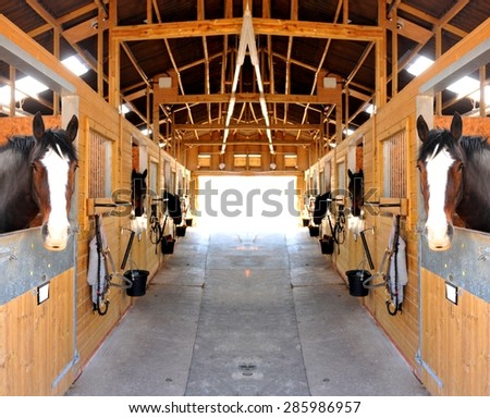 At The Stables (selective Focus On Horses)