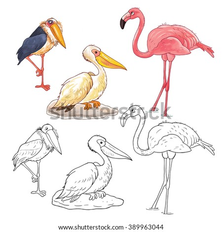 Marabou Isolated Stock Photos Royalty Free Images Vectors