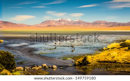Atacama Desert with Flamingos  - stock photo