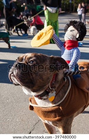 ATLANTA, GA - DECEMBER 5:  A dog wears a cowboy doll on its back after participating in a dog costume parade on December 5, 2015 in Atlanta, GA. - stock photo