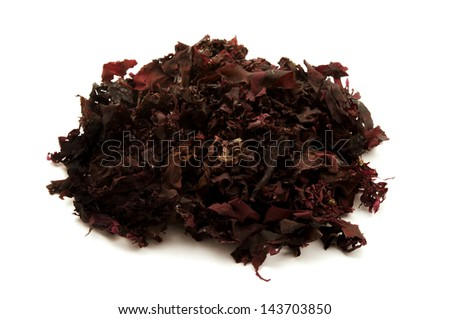 Atlantic dulse on a white background - stock photo