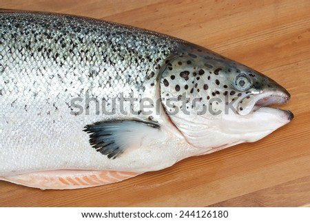 Atlantic salmon on a wooden table - stock photo