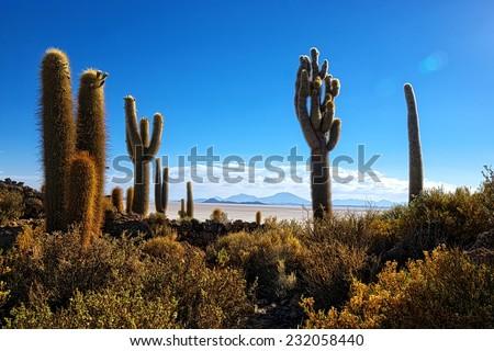 Atmospheric shot of a Incahuasi cactus hill at the Uyuni desert in Bolivia - stock photo