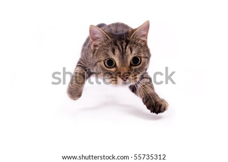 Attacking the cat on the white isolated background - stock photo