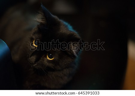 Attentive black cat looking away with a blurry background