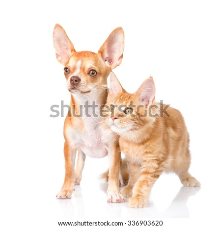 Attentive cat and dog looking away. isolated on white background - stock photo