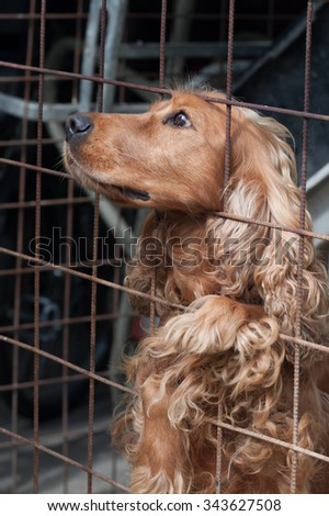 attentive Cocker Spaniel in a cage, looking to the left - stock photo