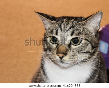 attentive white and gray cat with big eyes sitting on the carpet