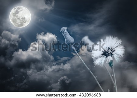 Attractive photo of flowers with full moon and moonlight in nightly sky. Beautiful nature use as a great background. The moon taken with my own camera, no NASA images used. - stock photo