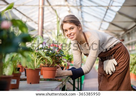 Attractive smiling young woman florist in brown apron taking care of blooming begonia in greenhouse  - stock photo