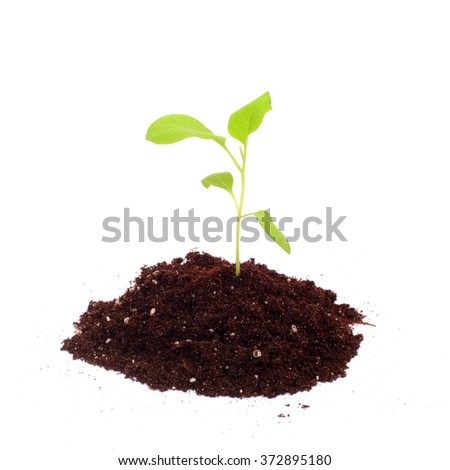 aubergine spring green sprouts closeup - stock photo