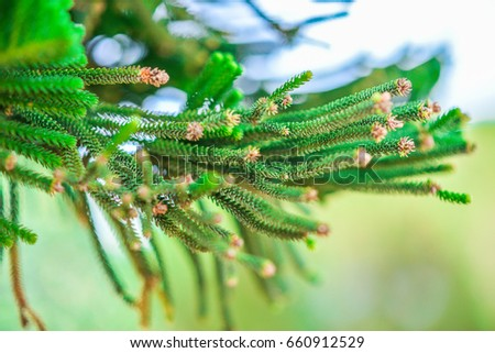 Auricles Stock Photo (Royalty Free) 660912529 - Shutterstock