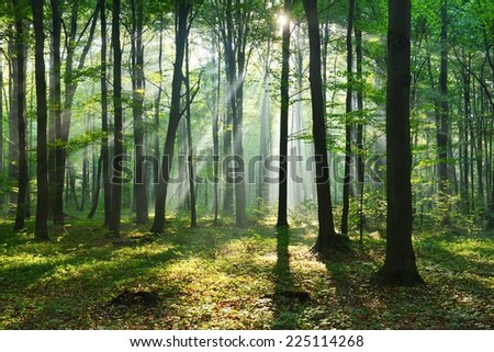 aurumn morning in the forest - stock photo