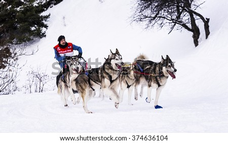 AUSSOIS SUR ARC, VANOISE, FRANCE - JANUARY 19 2016 - the GRANDE ODYSSEE the hardest mushers race in savoie Mont-Blanc, Remy COSTE, french musher, Vanoise, Alps