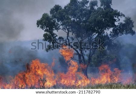 Australia Bush fire - stock photo