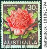 "AUSTRALIA - CIRCA 1968: A stamp printed in Australia from the ""State floral emblems"" issue shows Waratah (New South Wales), circa 1968. - stock photo"