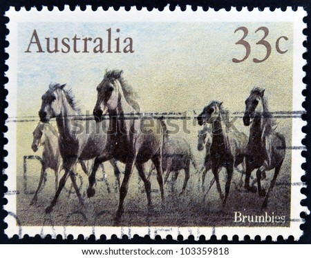 AUSTRALIA - CIRCA 1986: A stamp printed in australia shows Brumbies, circa 1986 - stock photo