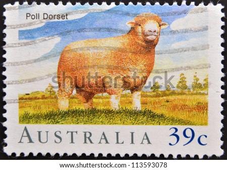 AUSTRALIA - CIRCA 1989: A stamp printed in Australia shows Poll Dorset Sheep, circa 1989 - stock photo
