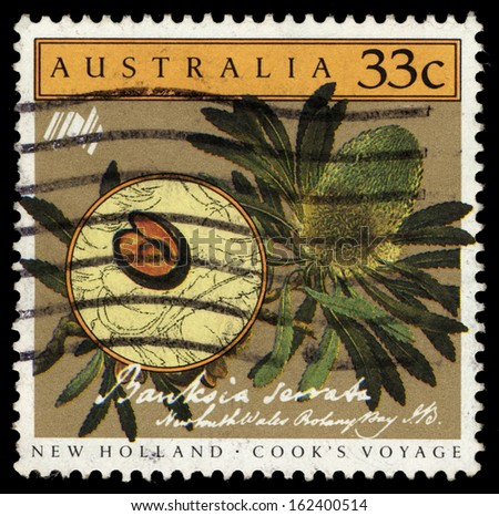 AUSTRALIA - CIRCA 1986: A Stamp printed in Australia shows the Banksia Serrata, Cooks New Holland Expedition series, circa 1986