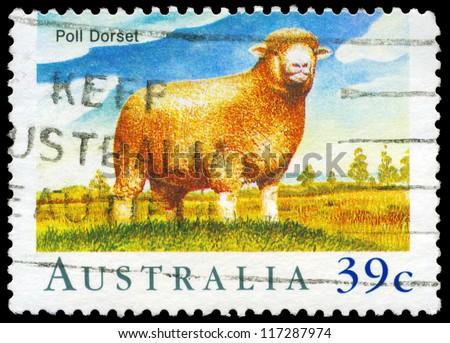 AUSTRALIA - CIRCA 1989: A Stamp printed in AUSTRALIA shows the Poll Dorset, Sheep series, circa 1989 - stock photo