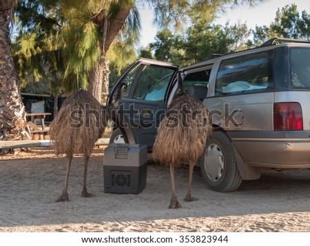 Australia, Monkey Mia, 01/04/2015, Australian emu looking in a backpackers car for food - stock photo