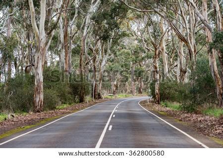 australia road in green eucalyptus forest in kangaroo island - stock photo