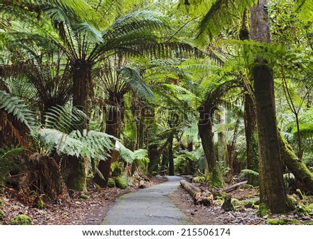 Australia Tasmania Mt Field national park green woods with easy disabled access wheelchair suitable walk way to local attractions under fern trees - stock photo